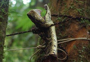 Maledizione del Dio Scimmia in Honduras: tra serpenti e insetti alla ricerca della città perduta