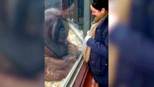YOUTUBE Orango bacia pancione della donna incinta e lei si commuove