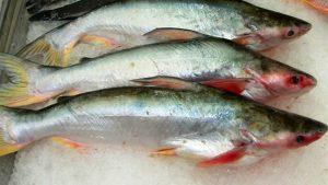 Pangasio troppo inquinato: il pesce ritirato da supermercati e mense