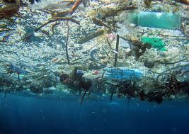 Pesce, attenti a cosa mangiate: si ingeriscono 11mila frammenti di plastica l'anno