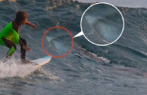 YOUTUBE Surf da brividi per un ragazzino: a pochi metri c'è uno squalo
