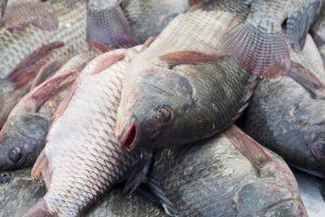 Mercurio nel pesce, fino a 7 volte in più con aumento delle temperature