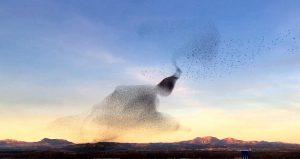 Uccelli, perché volano in stormi? Una nuova ricerca svela il mistero