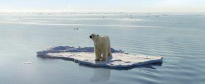 Riscaldamento globale, 2017 sarà anno record per aumento temperatura