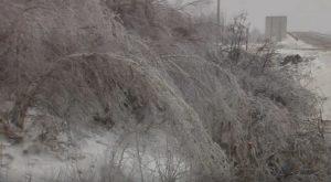 Tempesta di ghiaccio dura poco: ma gli alberi...