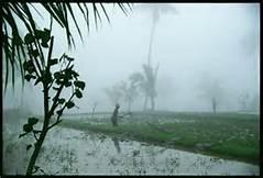 Piogge a Bali
