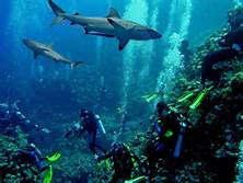 Squali nella Grande Barriera Corallina