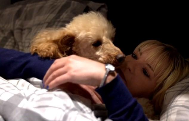 Cani e gatti che difendono le padrone dai mariti video for I cani youtube