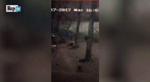 Cinghiale entra nel giardino e aggredisce cane: emergenza a Roma VIDEO