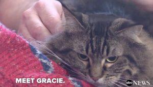 Gatta Grace li sveglia e li salva dall'intossicazione VIDEO
