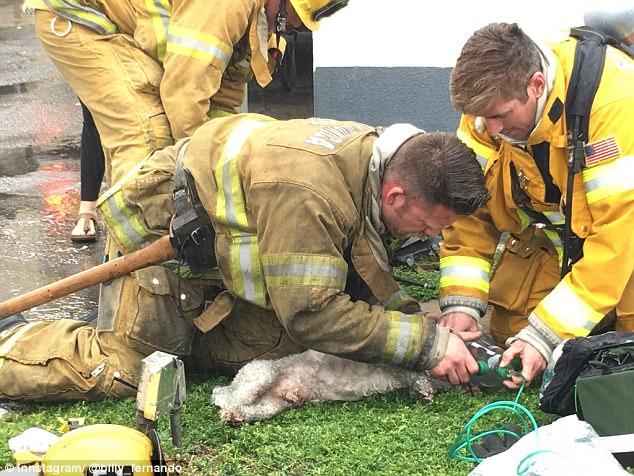 Vigili del fuoco rianimano il cane estratto dalla casa in for Casa progetta il trotto del cane