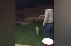 YOUTUBE Gatto si avvicina per avere coccole ma...gli tirano un calcio e vola via
