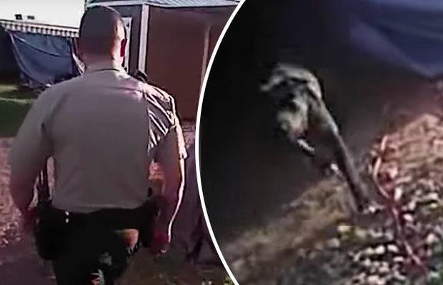 YOUTUBE Poliziotto spara al cane: ma voleva davvero morderlo?
