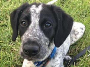 Nuova Zelanda: ucciso cucciolo di cane antibomba dopo fuga in aeroporto