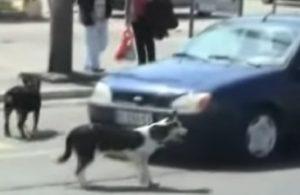 YOUTUBE Automobilista suona clacson, cani si vendicano così