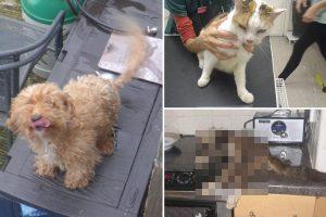 Vanno in vacanza e lasciano morire i loro cani e gatti: condannati a 2 anni