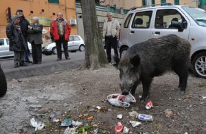 Genova, due cinghiali chiusi in un parcheggio a Albaro