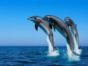 """Eolie, pescatori contro i delfini: """"Si mangiano tutto il pesce, o noi o loro"""""""