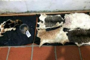 Rapiva i gatti dei vicini e li mangiava: arrestato