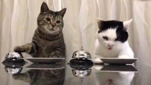 Gatti ordinano il pranzo....suonando il campanello