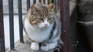 Killer di gatti: tre anni e sei mesi. Giudice raddoppia la pena chiesta dal pm
