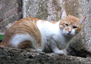 Strage di gatti a Montefranco vicino Terni: trappole e veleno per ucciderli