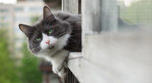 Cade dalla finestra per salvare un gatto: ha rischiato di morire a 14 anni