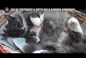 Le Iene, gatto scuoiato vivo: La padrona denuncia il vicino in tv