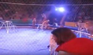 YOUTUBE Leone attacca il domatore durante lo show al circo