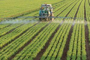 Pesticida naturale: uccide i parassiti ma è innocuo per uomo e animali. La scoperta italiana