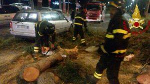 Roma, albero cade e si schianta su un'auto: ferito il conducente