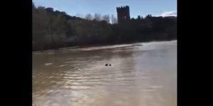 Firenze. Ragazza si getta nell'Arno, vigile urbano si tuffa e la salva VIDEO