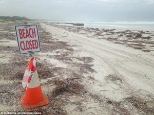 Australia, ragazza muore dopo attacco squalo a Wylie Bay