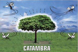 Zanzare addio: ecco la Catambra, nuova pianta repellente