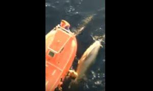 YOUTUBE Balena incastrata nella rete. Il marinaio si tuffa e la salva