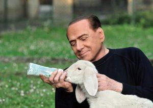 Effetto Berlusconi & Boldrini: agnelli macellati a un mese, la carne non si vende, il latte serve per il formaggio