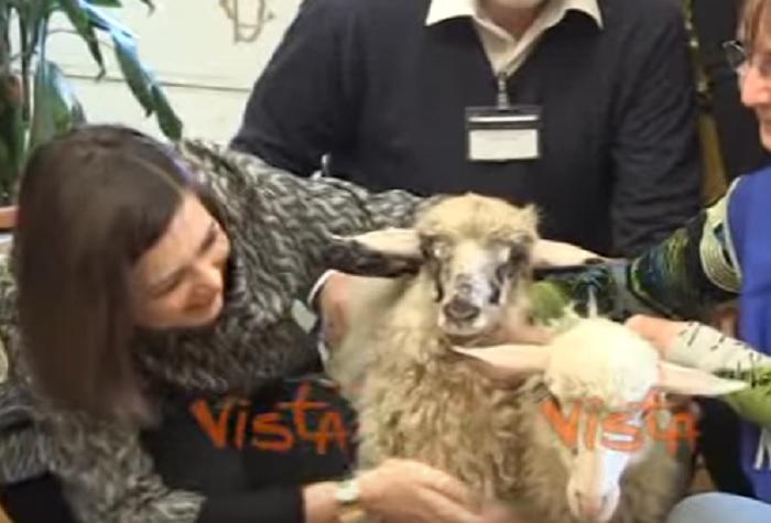 YOUTUBE Laura Boldrini come Berlusconi: adottate due pecorelle