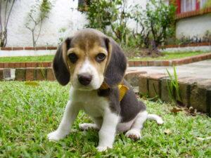"""Cani si accoppiano, ma il cucciolo viene negato al """"papà"""". E il caso finisce in tribunale"""