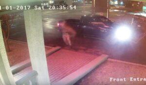 Rapper canadese scende dall'auto e viene travolto da cervo