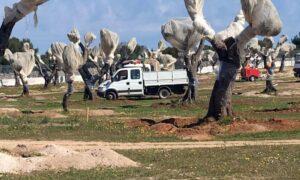Gasdotto Tap, riprende eradicazione ulivi: ancora tensioni a Melendugno