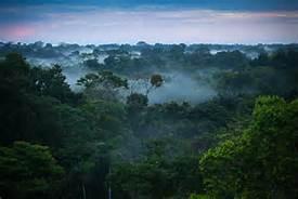 Una foresta amazzonica