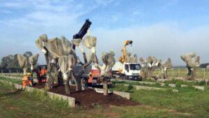 Gasdotto Tap, Tar respinge ricorso Regione Puglia: riprende espianto degli ulivi