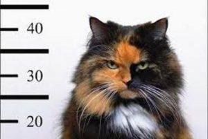 Pieve Ligure, gatto killer fa strage di paperotti: un mese fa uccise 12 conigli