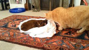 YOUTUBE Il gatto cerca di rianimare l'amico morto di cancro: il video straziante