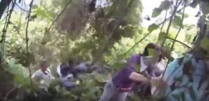 Gorilla attacca: turisti terrorizzati, guida calma l'animale