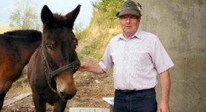 Iroso, l'ultimo mulo degli alpini: sarà la star all'adunata del Piave