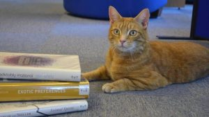 Jasper, il gatto a tre zampe che aiuta gli studenti a combattere lo stress da esami