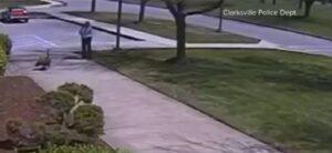 Oca selvatica attacca: agente di polizia finisce a terra
