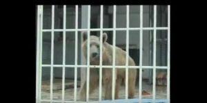 Orso strappa un braccio ad un bimbo di 9 anni e lo mangia, tragedia allo Zoo