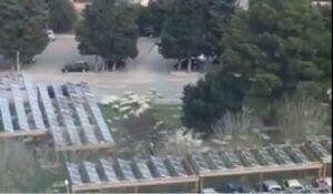 Cagliari, prato ospedale Brotzu invaso da pecore al pascolo